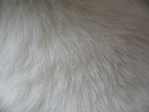 Free Fur Textures From BittboxFrom