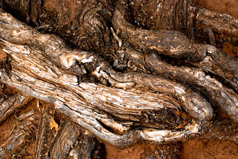 Free Textures — Mangled Tree Roots