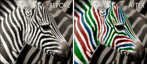 Using Photoshop To Change The Color Of The Stripes On A Zebra - Video Tutorial