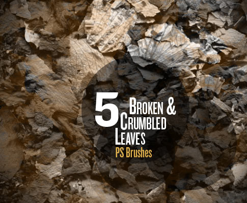 Free Broken And Crumpled Leaves Photoshop Brushes - Set Of 5