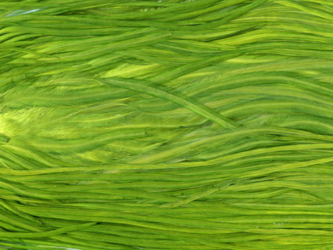 5 Diverse Textures From Bittbox - Green Grassy Texture
